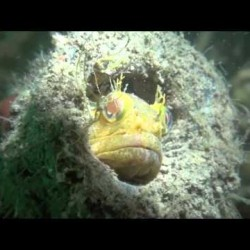 Video: California Central Coast Kelp Forest Promo