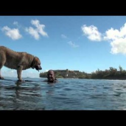 Video: Bill Hamilton and Sava the Surfing Dog