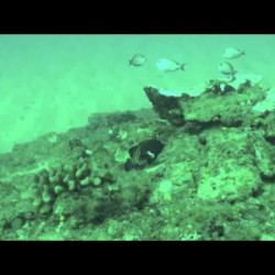 Video: Invasive Species