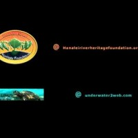 Video: The Worlds Guide for Hawaiian Reef Fish Video Trailer
