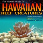 reef-creatures-DVD-sm