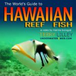 reef-fish-DVD-sm